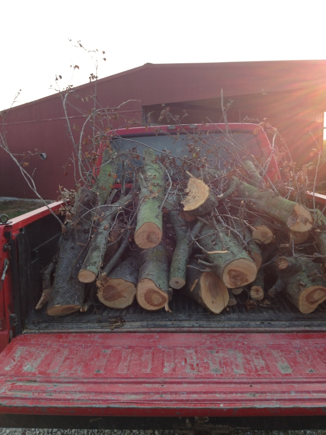 The boys should be happy to see a load of firewood delivered to the pond/campsite.  I love the sun's rays in the picture!
