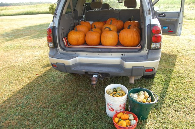 1st Harvest - so fun!!