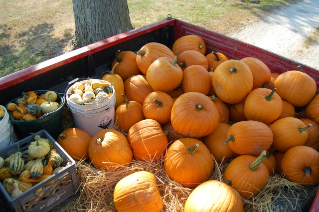 530 pounds of pumpkins to the local garden/landscape center.