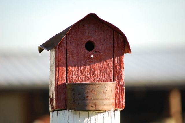 Rustic_Birdhouse