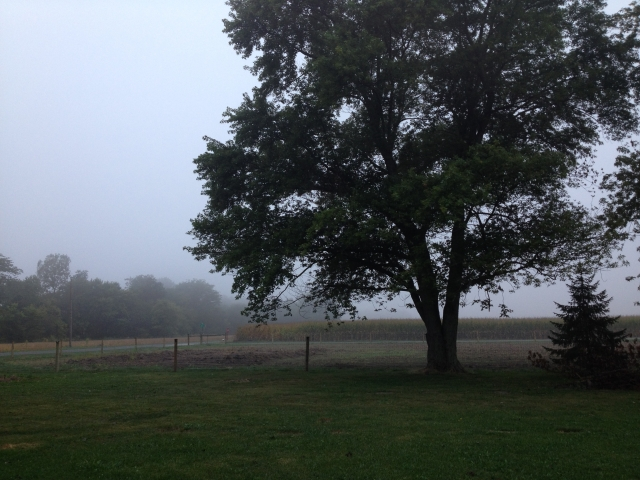 Many foggy mornings this week.