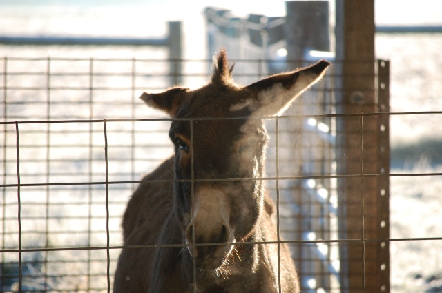 ...and then, I got stink-eye.  Donkey stink-eye.