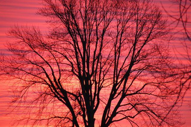 Winter sky at sunrise.