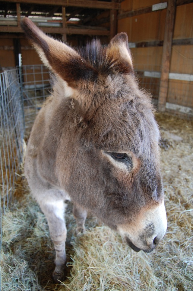 Happy_the_Donkey