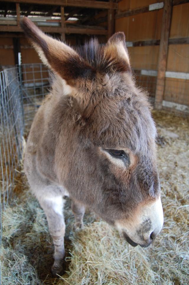 Happy_the_Donkey