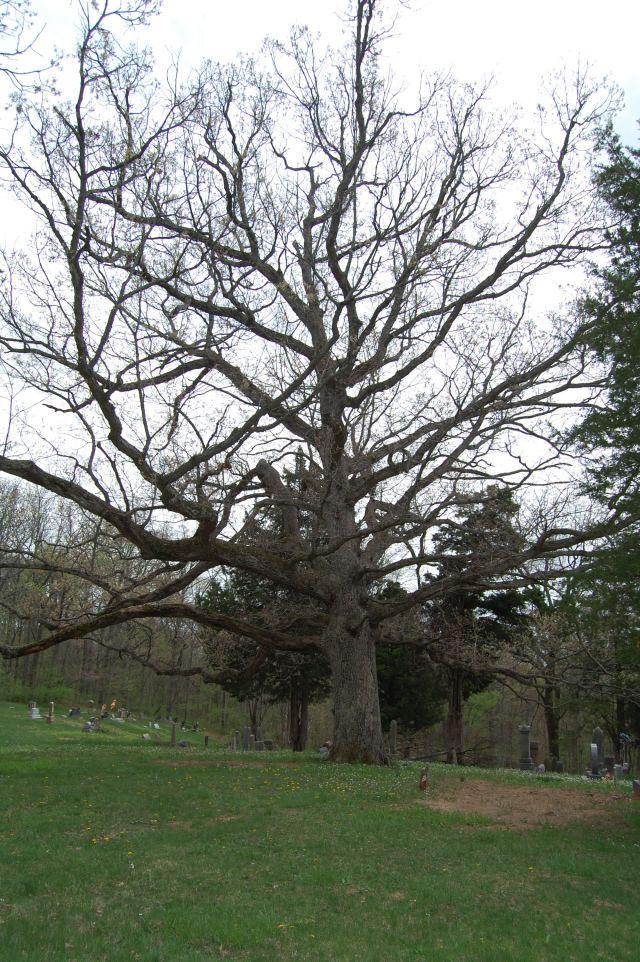 LOVE this tree!  Wish I had it in my yard.