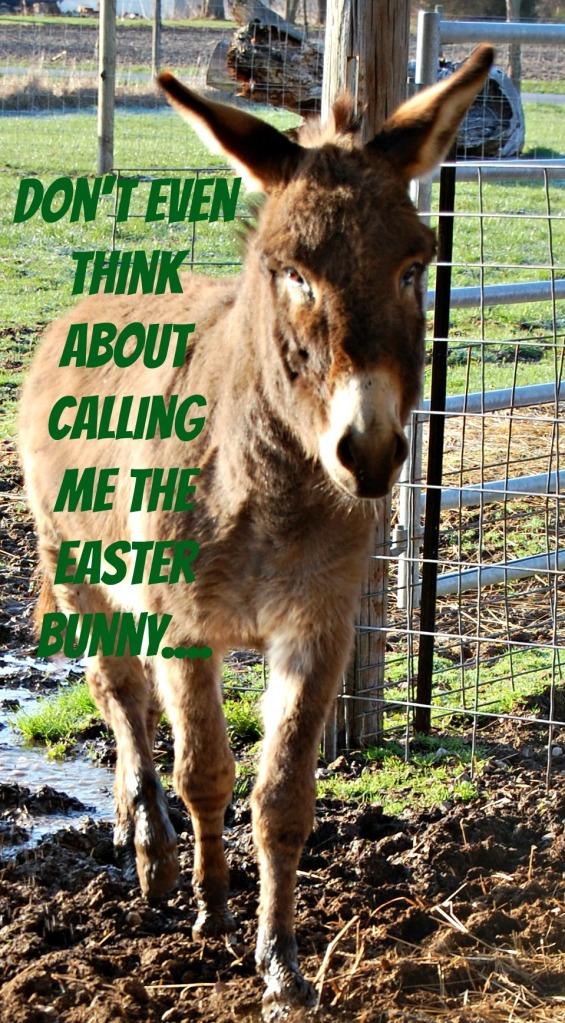 Happy_Donkey