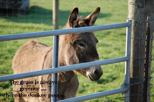 DonkeyGreenGrass