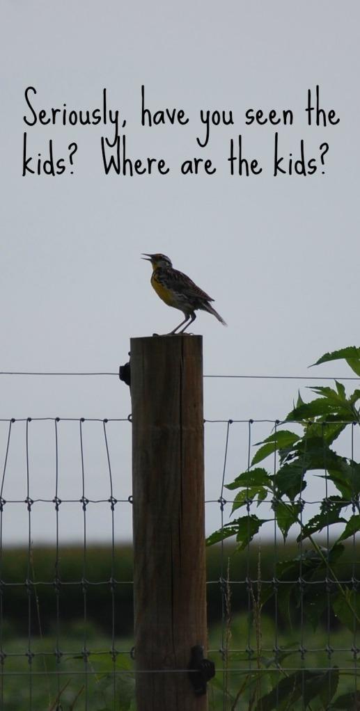 Meadowlark2
