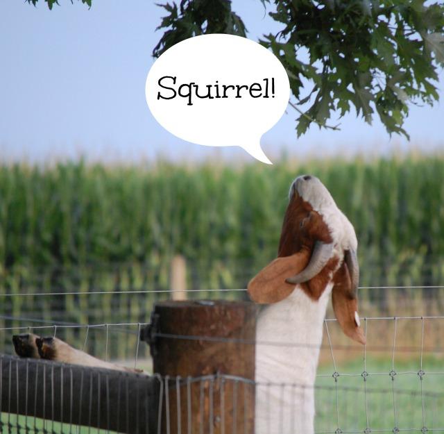 Aug1Squirrel