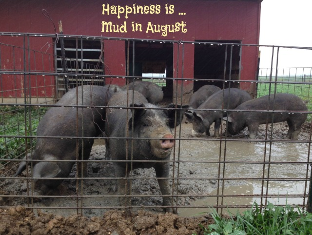 Pigs_In_Mud