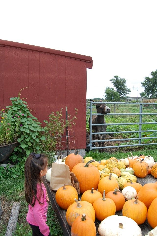 Picking_Pumpkins