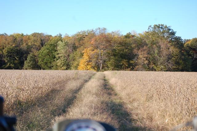 Illinois_soybeans