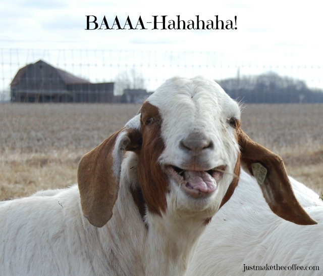 Laughing_Goat