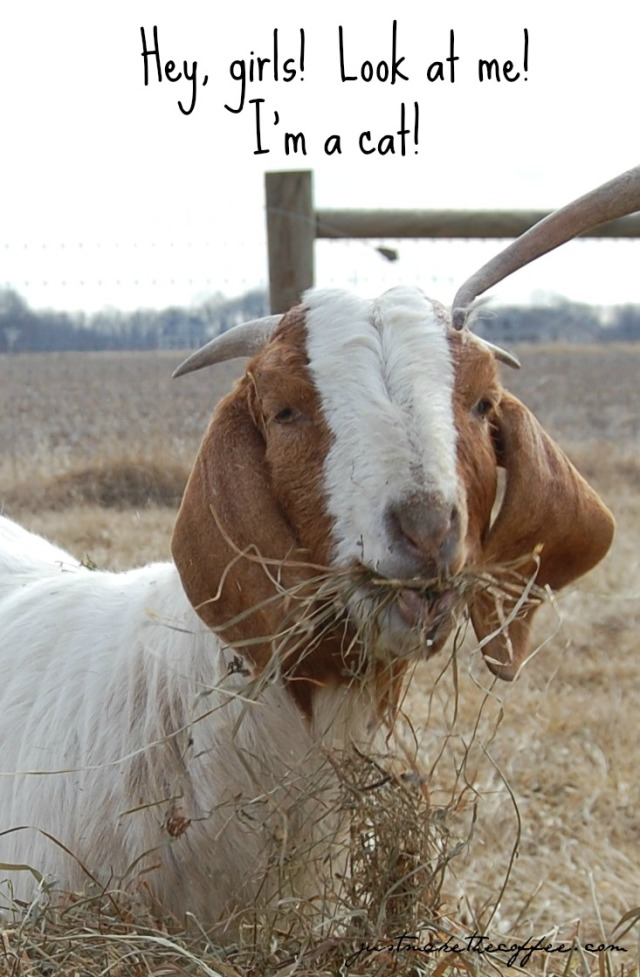 Cute_Goat