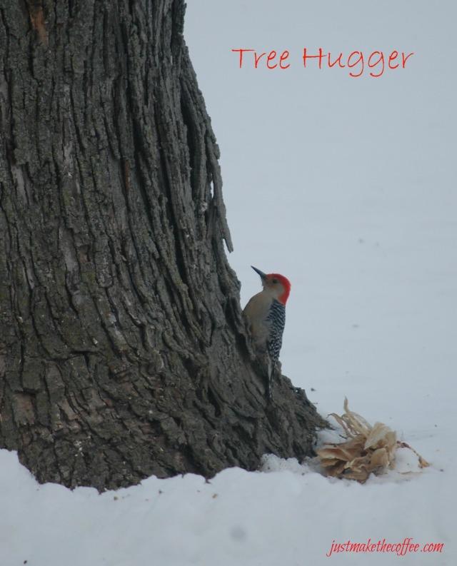 Feb27TreeHugger