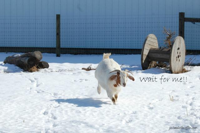 GoatsWait