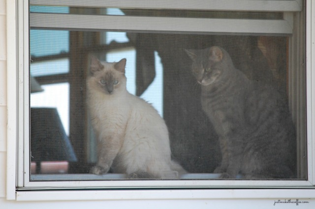 23WindowCats