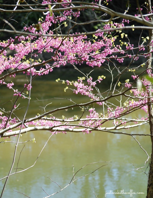 May4RiverRedbud