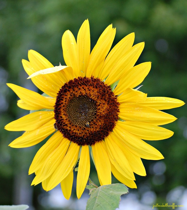 July7 Sunflower