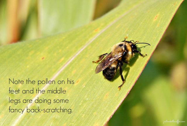 21st Bee_Pollen