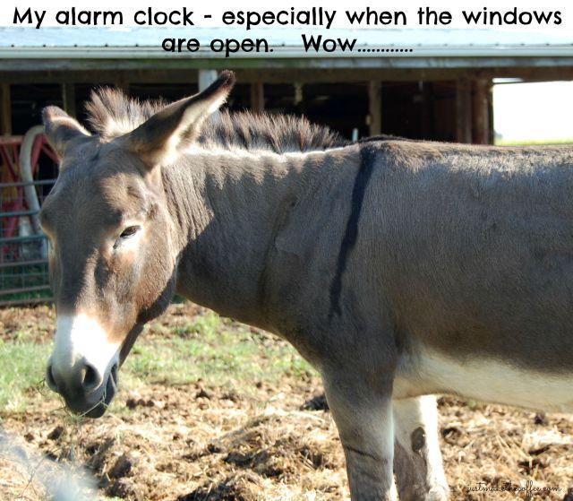 21st Donkey