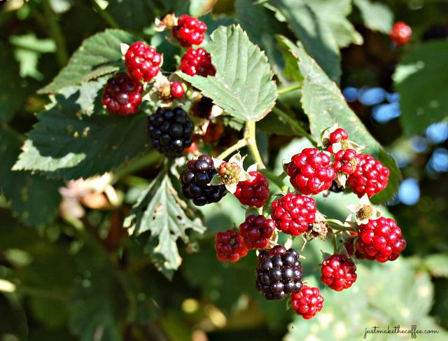31 Berries