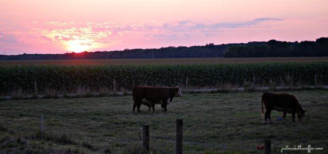 Sunset 8_3