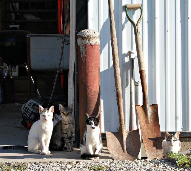 Cat Committee