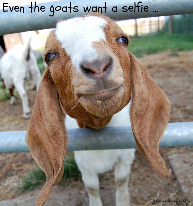 Sept4 Goat Selfie