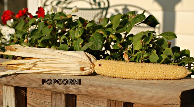 Sept4 Popcorn