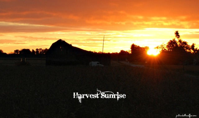 Harvest Sunrise