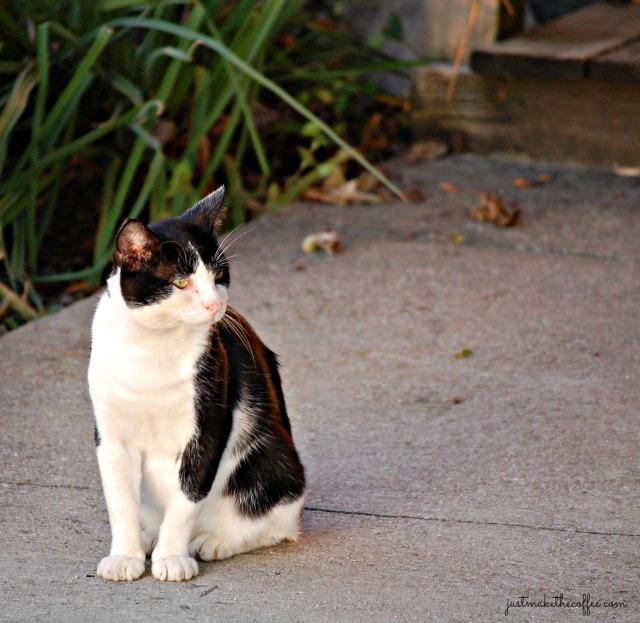 Tom Kitty