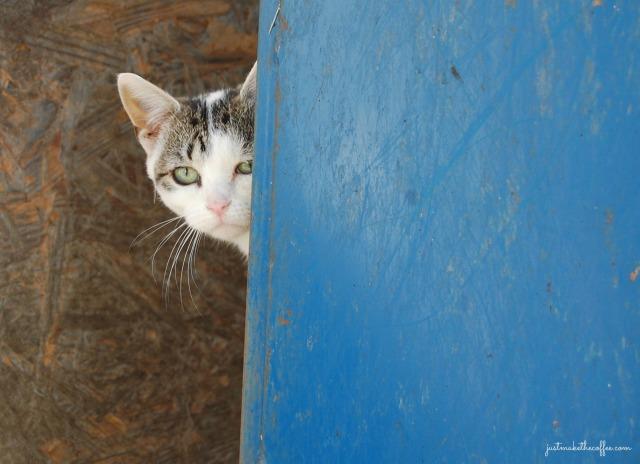 Patience barn cat