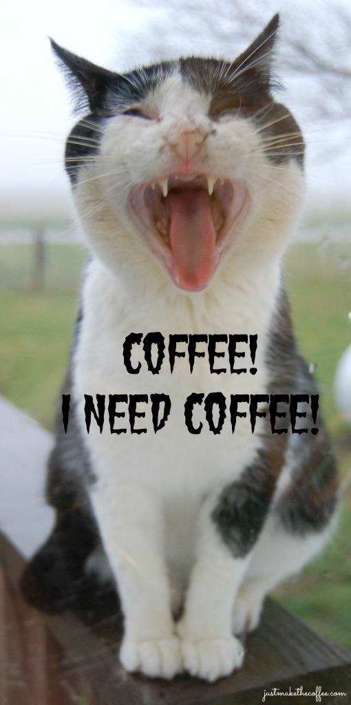 3_20 Tom_Kitty_Coffee