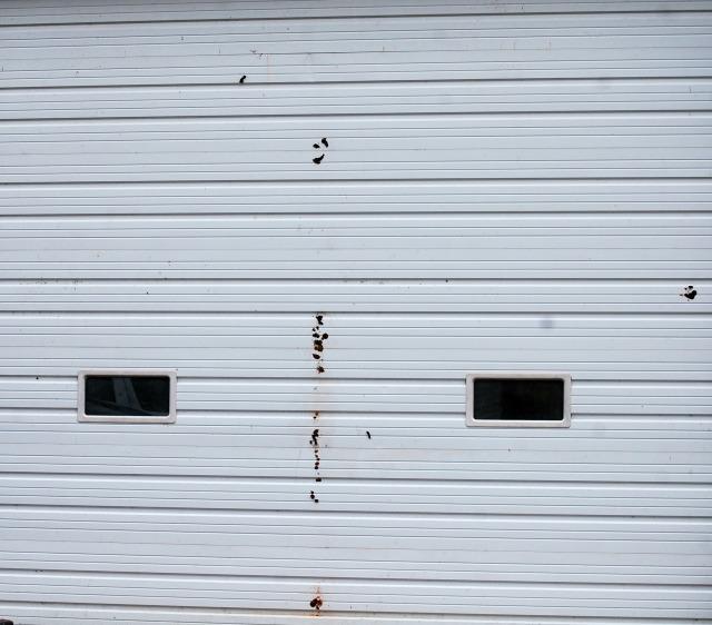 Shed_Door