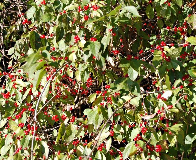 22octberries