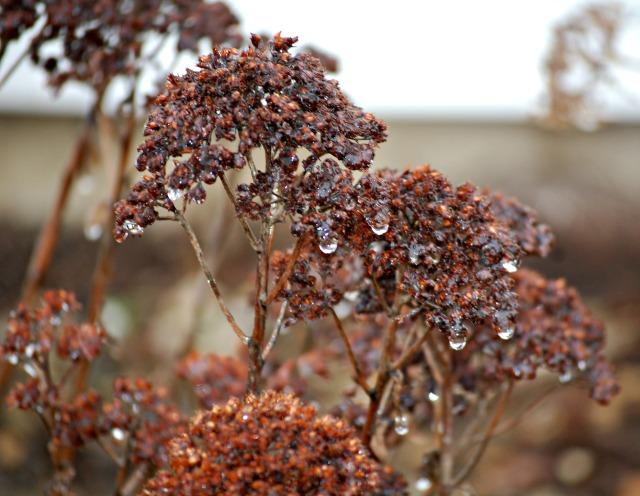 icyflowerheads