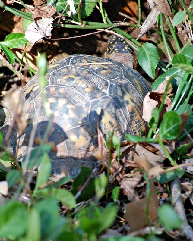 Apr29Box_Turtle