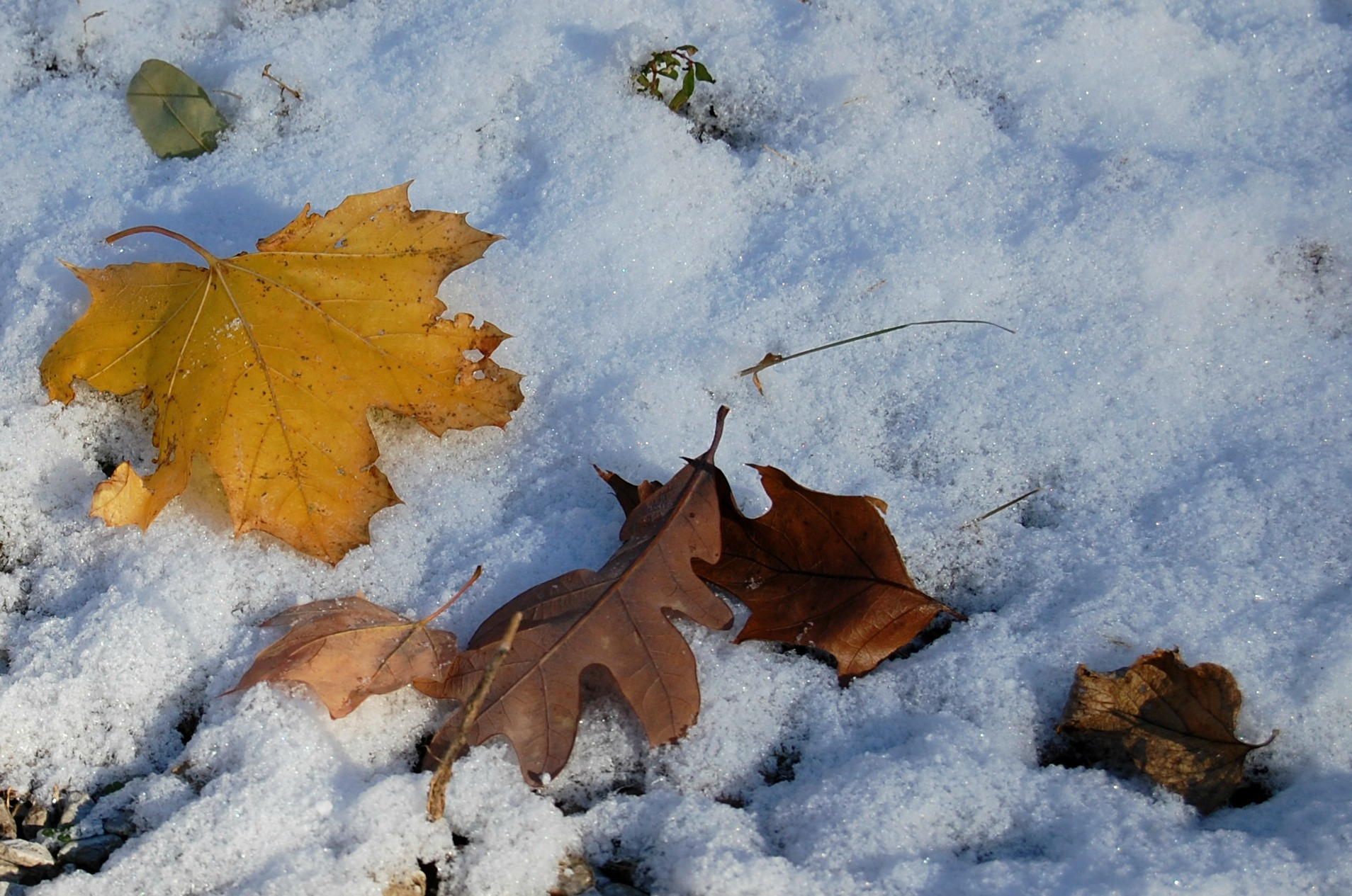 Nov10_Contrasts