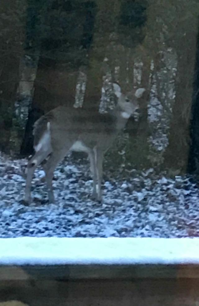 Nov14_Deer