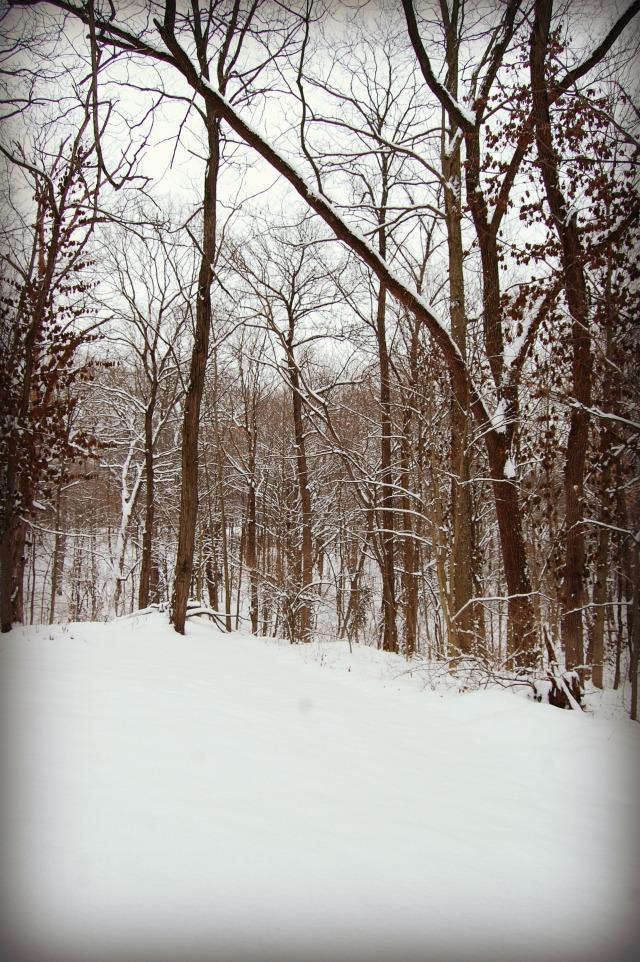 snowybackyard