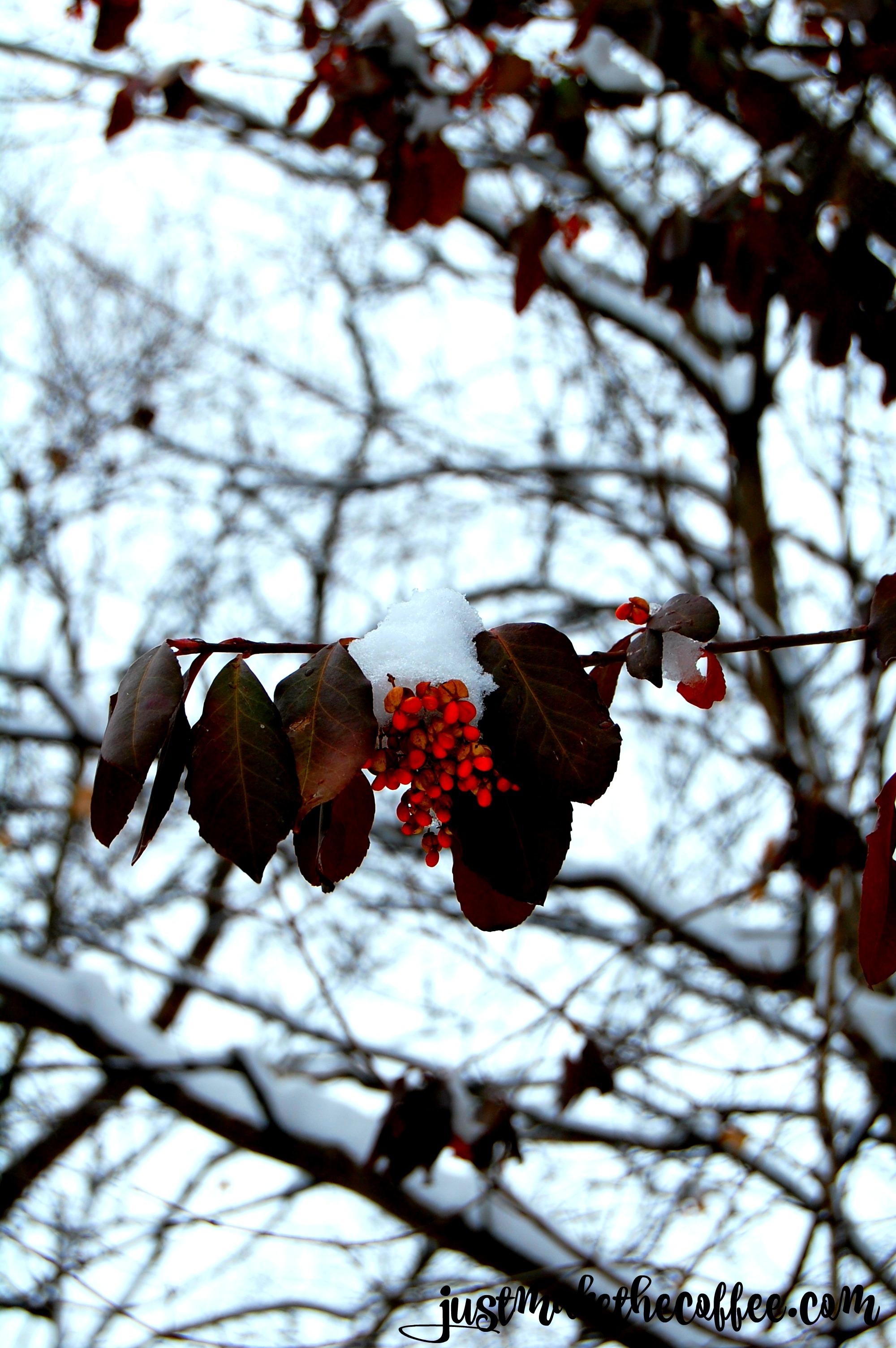 snowyberries